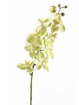 Umělé květiny - Umělá Orchidej Green 75cm