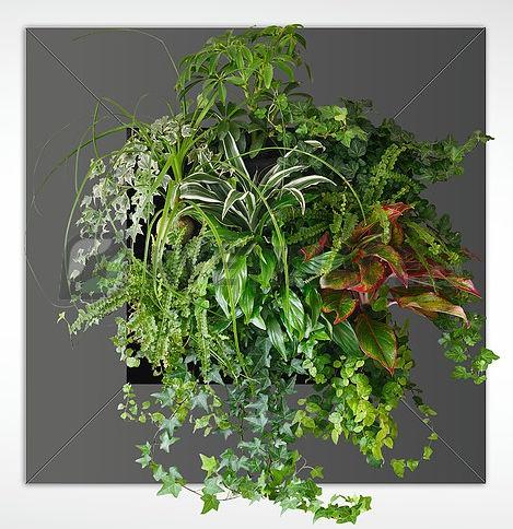 Zelené stěny - Živý obraz antracit 72x72cm