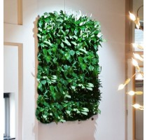 Živá zelená stěna základní set 50x82cm