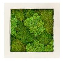 Mechový obraz natural 70x70cm 30%silver+70%flat mechu