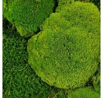 Stabilizovaný mech Ball moss volně 1 m2