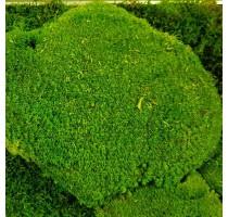 Stabilizovaný mech Ball moss volně 20x20 cm