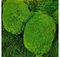 Stabilizovaný mech Ball moss volně 25x25 cm