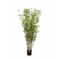 Bamboo Oriental Tuft 100cm