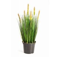 Foxtail Grass Green 60cm