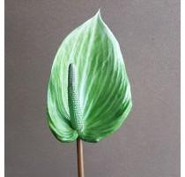 Umělý zelený květ Anthurium 85cm