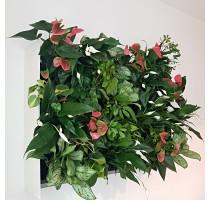 Živá zelená stěna základní set 100x82cm