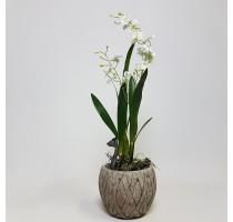 Umělá orchidej Oncidium bílá 65cm