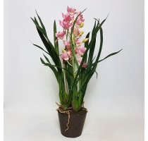 Umělá Orchidej Cymbidium Pink 75cm
