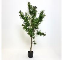 Umělý Podocarpus 120cm