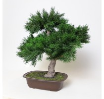 Umělá bonsaj pinus 48cm