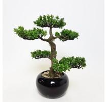 Umělá bonsaj Pilea 34cm