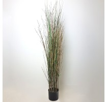 Grass Plant Bamboo 120cm