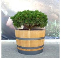 Barikovaný dubový květináč 110 litrů 70x48cm