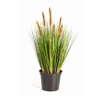Foxtail Grass Brown 60cm