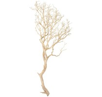 Manzanita natural 120cm