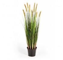 Foxtail Grass Green 150cm