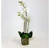 Umělá Orchidej White 3 st. 70cm
