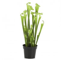 Umělá Sarracenia Green 65cm