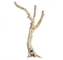 Dekorativní dřevěná větev Cholla 60cm