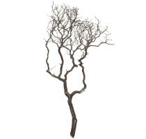 Manzanita brown 120cm