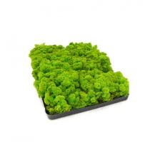 Stabilizovaný mech Island světle zelený 2kg-0,25m2
