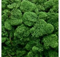 Stabilizovaný mech Island přirozeně zelený 4kg-0,5m2