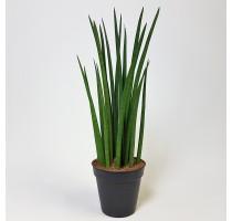 Sansevieria Spikes 19x70cm