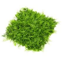 Umělá zelená stěna mix kapradí a juniperus 50x50cm
