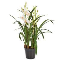 Umělá Orchidej Cymbidium bílá 80cm