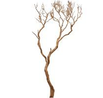 Manzanita natural 300cm