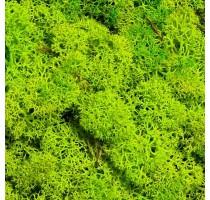 Stabilizovaný mech Norský Spring Green 0,5 m2