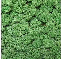Stabilizovaný mech Norský Medium Green 0,5 m2