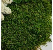 Stabilizovaný mech Flat moss volně 20x20 cm