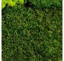 Stabilizovaný mech Flat moss volně 25x25 cm