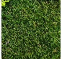 Stabilizovaný mech Flat moss volně 1 m2