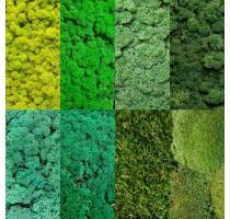 Vzorník zelených stabilizovaných mechů