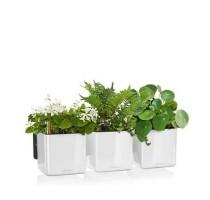 Lechuza zelená stěna premium white komplet