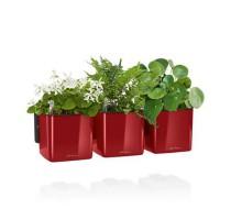 Lechuza zelená stěna premium scarlet komplet