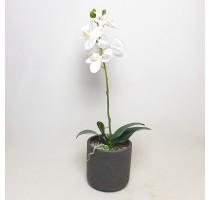 Umělá Orchidej bílá 55cm